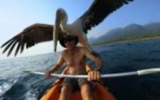 Pelikanı Sahiplenip Balık Tutmayı Öğreten Adam