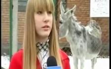 Tatlı Rus Kızın Eşşek İle İmtihanı