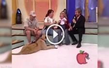 Aslan bebeğe canlı yayında saldırdı, annesi gülerek izledi