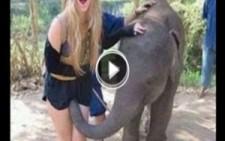 İlginç Ve Komik Hayvan Saldırıları