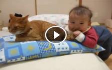Bebek Kedinin Kuyruğunu Isırınca Kedinin Tepkisine Dikkat!