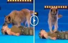 Eğitimli köpek ilk yardım yaparsa