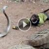 Maymunla Kobra Yılanının İnanılmaz Mücadelesi