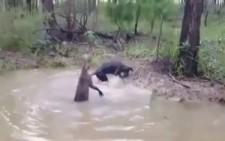 Kanguru ile Köpek Kavgası Mutlaka İzle