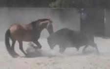 At İle Boğanın Karşılaşması Sonuna İnanamayacaksınız