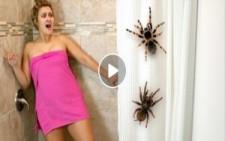 Kız Arkadaşa Acımasız Örümcek Şakası